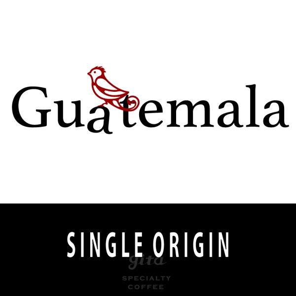 画像1: グァテマラ ラ タシータ農園 500g (1)